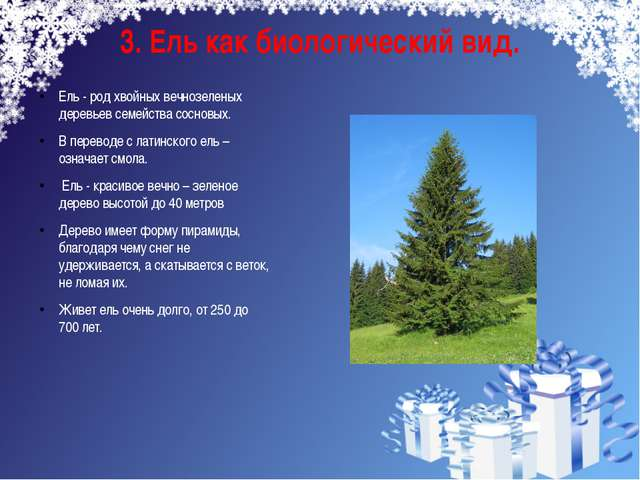 3. Ель как биологический вид. Ель - род хвойных вечнозеленых деревьев семейст...
