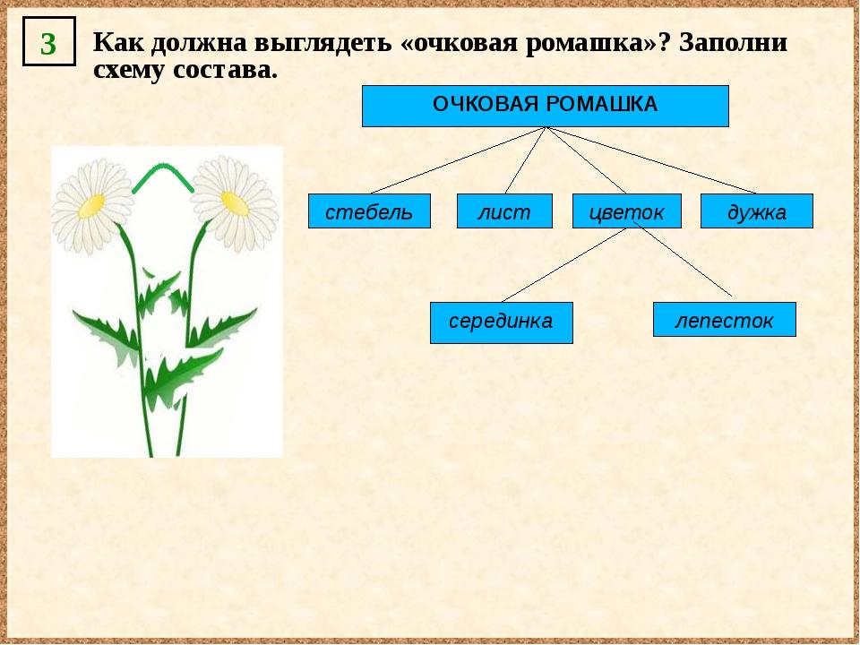 ОЧКОВАЯ РОМАШКА стебель лист цветок дужка серединка лепесток 3 Как должна выг...