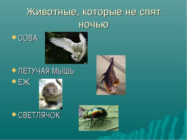 Животные, которые не спят ночью СОВА ЛЕТУЧАЯ МЫШЬ ЕЖ СВЕТЛЯЧОК