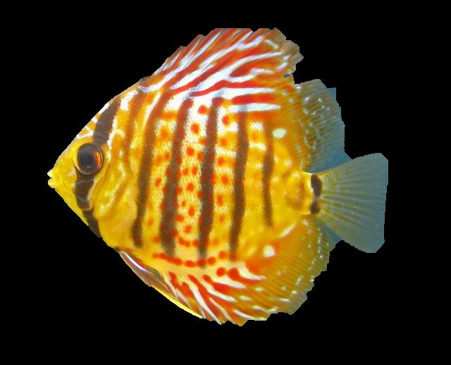 тропических рыб Бесплатные фото и векторы