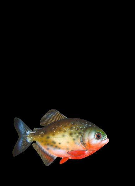 Демоматериал. Рыбы морские и пресноводные - ИГРОСАД.рф