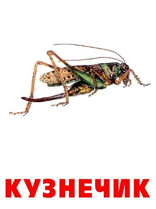 Насекомые 2 - Картинка 492/5