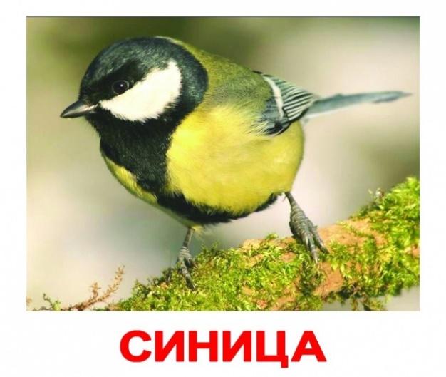 Скачать Скачать картинки птиц для детей 2