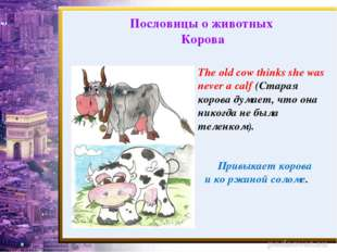 The old cow thinks she was never a calf (Старая корова думает, что она никогд