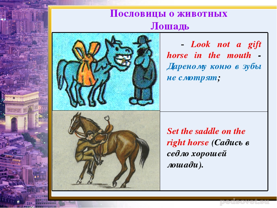 - Look not a gift horse in the mouth - Дареному коню в зубы не смотрят; Set t...