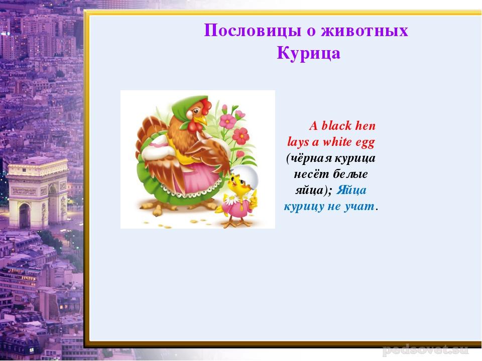 A black hen lays a white egg (чёрная курица несёт белые яйца); Яйца курицу не...