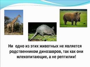 Ни одно из этих животных не является родственником динозавров, так как они м
