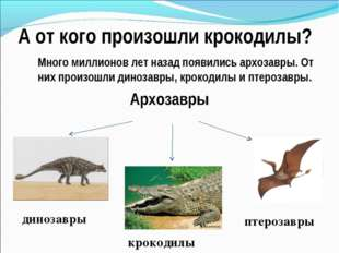 А от кого произошли крокодилы? Много миллионов лет назад появились архозавры.