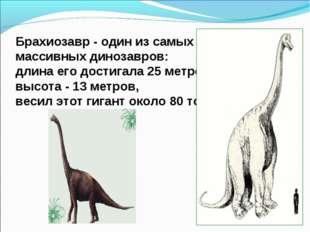 Брахиозавр - один из самых массивных динозавров: длина его достигала 25 метро