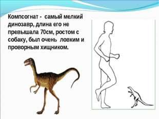Компсогнат - самый мелкий динозавр, длина его не превышала 70см, ростом с соб