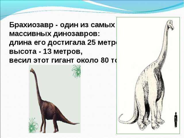 Брахиозавр - один из самых массивных динозавров: длина его достигала 25 метро...