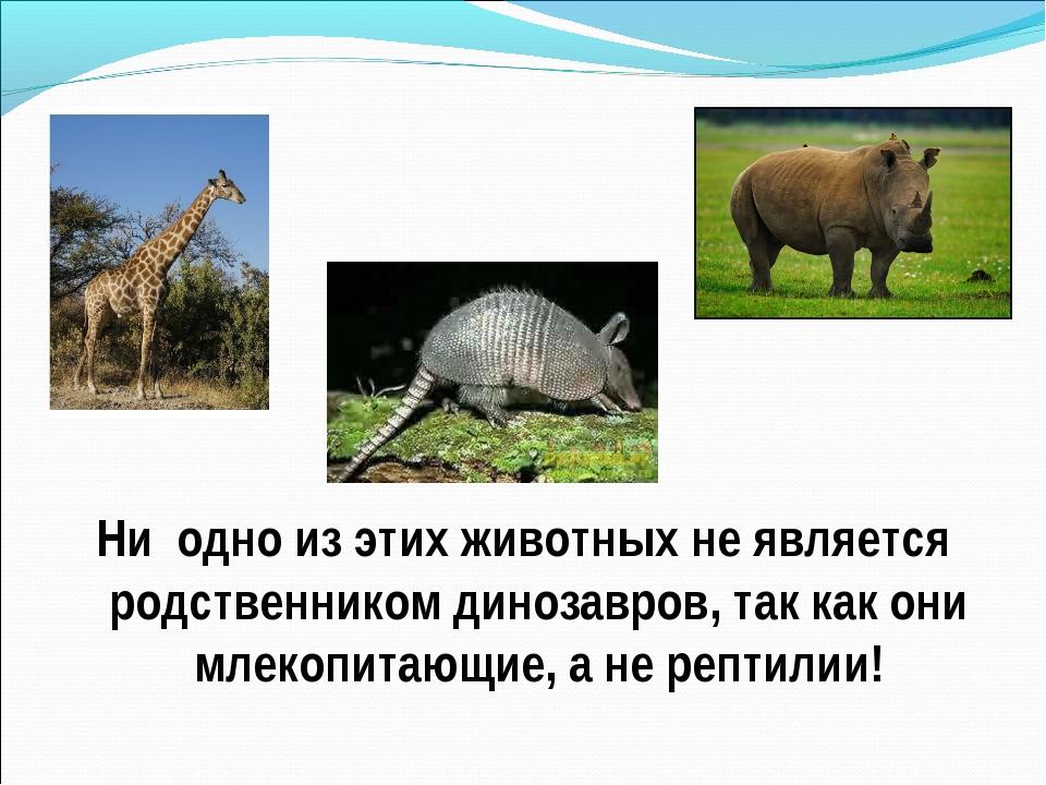 Ни одно из этих животных не является родственником динозавров, так как они м...