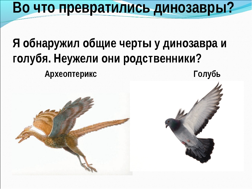 Во что превратились динозавры? Я обнаружил общие черты у динозавра и голубя....