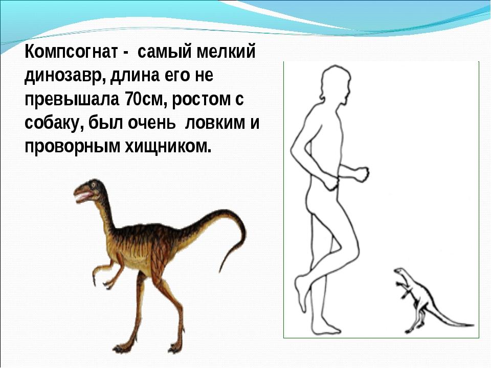 Компсогнат - самый мелкий динозавр, длина его не превышала 70см, ростом с соб...