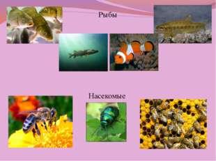 Рыбы Насекомые