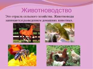 Животноводство Это отрасль сельского хозяйства. Животноводы занимаются развед