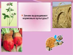 Зачем выращивают кормовые культуры?