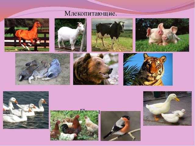Млекопитающие. Птицы