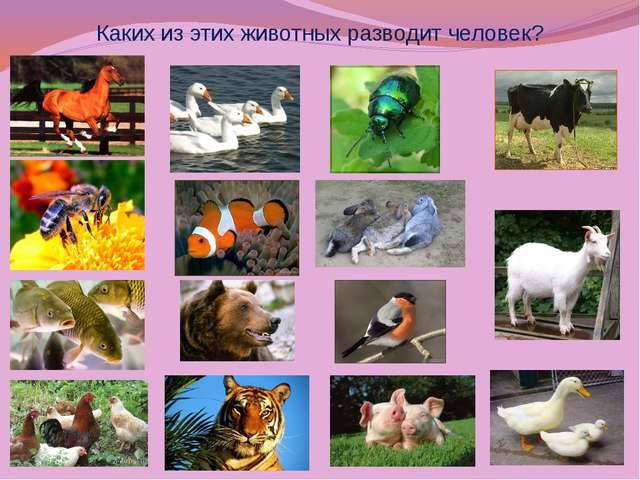 Каких из этих животных разводит человек?