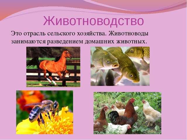 Животноводство Это отрасль сельского хозяйства. Животноводы занимаются развед...
