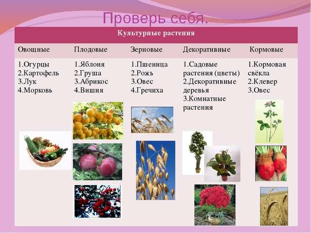 Проверь себя. Культурные растения Овощные Плодовые Зерновые Декоративные Корм...