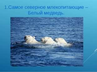 1.Самое северное млекопитающие – Белый медведь.