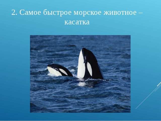 2. Самое быстрое морское животное – касатка