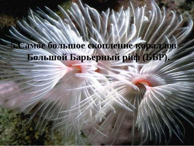5.Самое большое скопление кораллов – Большой Барьерный риф (ББР).