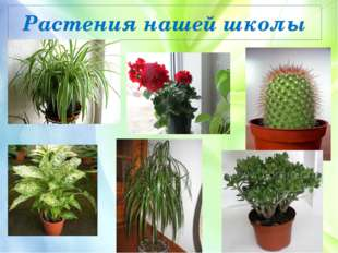 Растения нашей школы