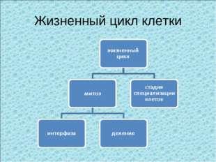 Жизненный цикл клетки