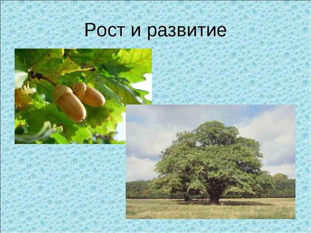 Рост и развитие