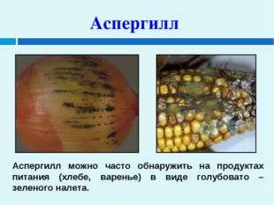 Аспергилл Аспергилл можно часто обнаружить на продуктах питания (хлебе, варен