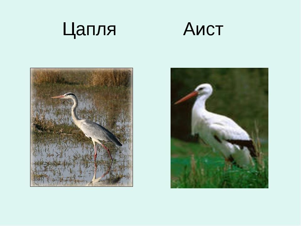 Аист или цапля