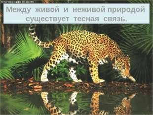 О.М.Япс живое неживое
