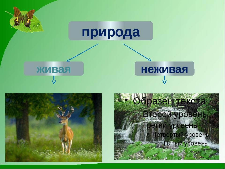 природа О.М.Япс живая неживая