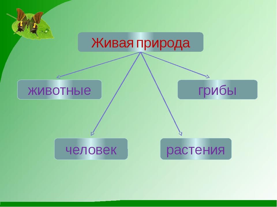 животные О.М.Япс