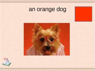 an orange dog