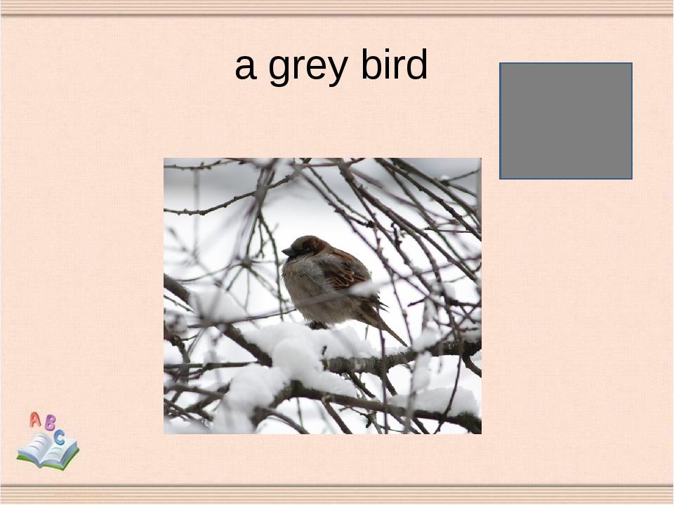 a grey bird