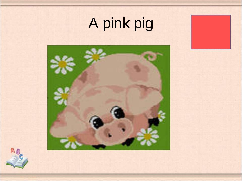 A pink pig