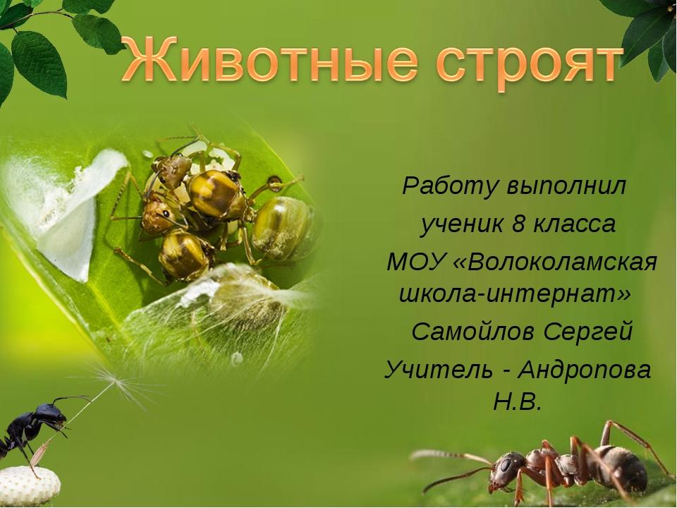 Работу выполнил ученик 8 класса МОУ «Волоколамская школа-интернат» Самойлов С...