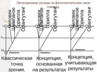 Эволюционные взгляды на филогенетические связи гоминид 5 10 Рамапитек Рамапит