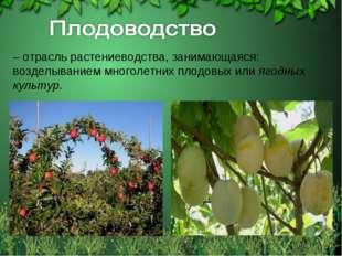 – отрасль растениеводства, занимающаяся: возделыванием многолетних плодовых и