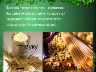 Пшеница- главная культура - кормилица. Это самое первое растение, которое ста