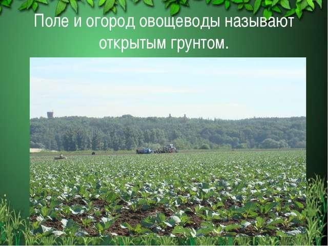 Поле и огород овощеводы называют открытым грунтом.