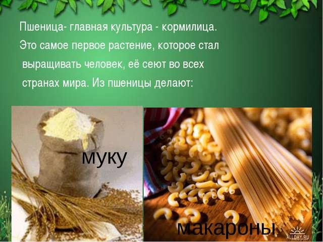 Пшеница- главная культура - кормилица. Это самое первое растение, которое ста...