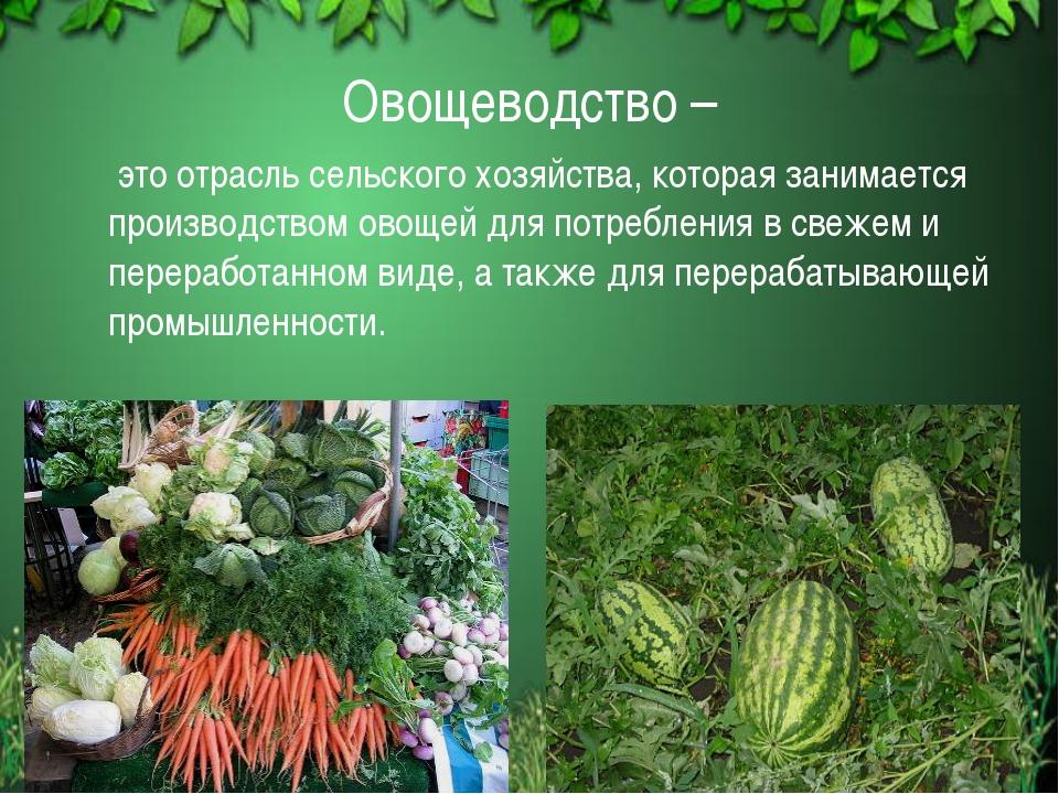 Овощеводство –  это отрасль сельского хозяйства, которая занимается производ...