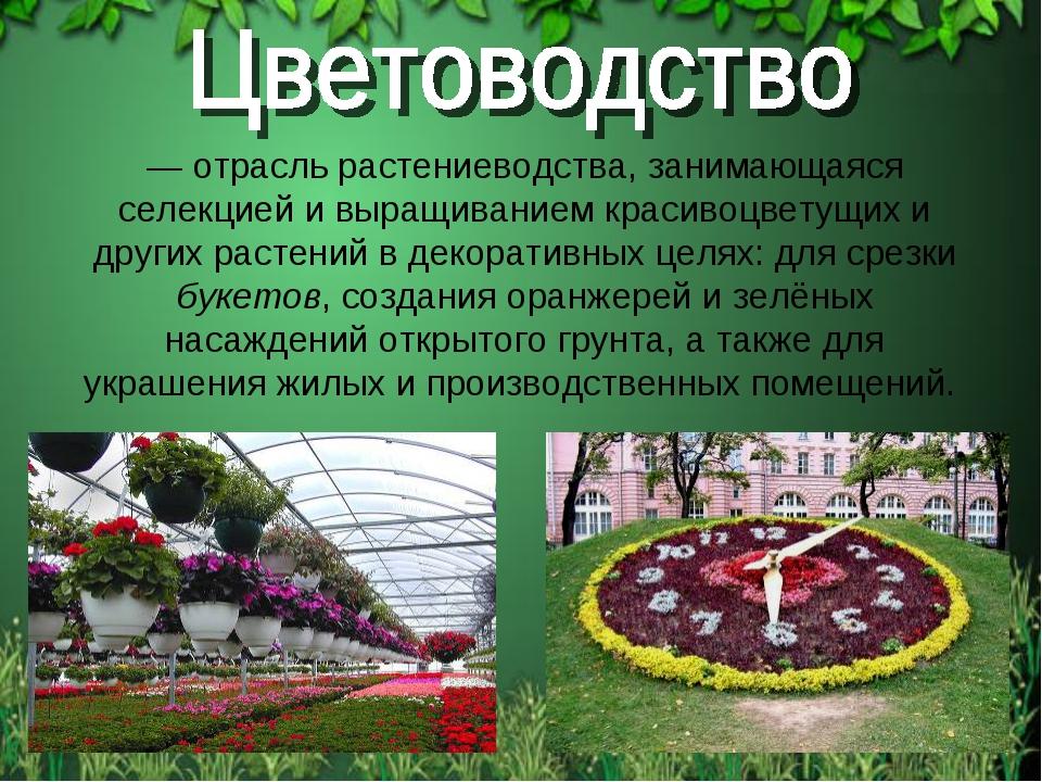 — отрасль растениеводства, занимающаяся селекцией и выращиванием красивоцвету...