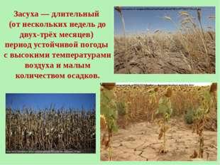 Засуха— длительный (от нескольких недель до двух-трёх месяцев) период устойч