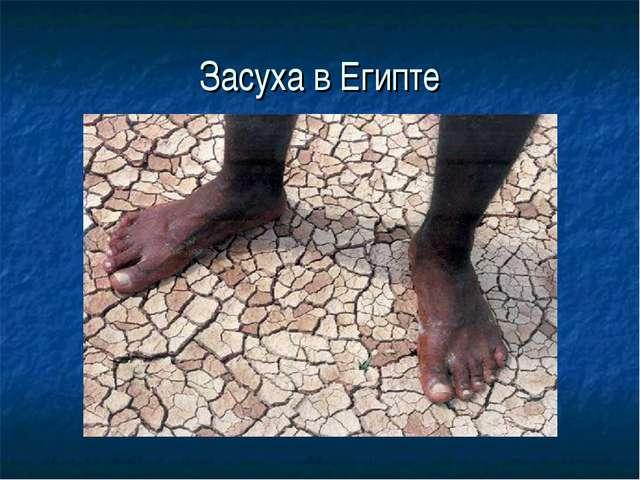 Засуха в Египте