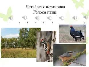 Четвёртая остановка Голоса птиц 1 2 3 4 5 6 7